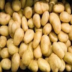 1405 Jelly Patates Tohumu 1000kg