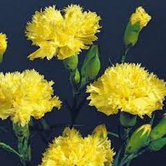 1322-Karanfil Sarı 1paket