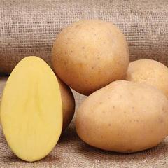 1408 Marabel Patates Tohumu 1000kg