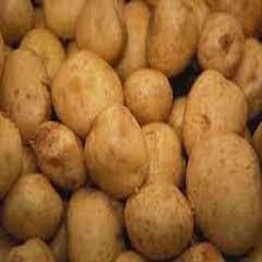 1411 Provento Patates Tohumu 1000kg