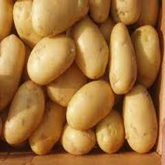 1412 Sante Patates Tohumu 1000kg